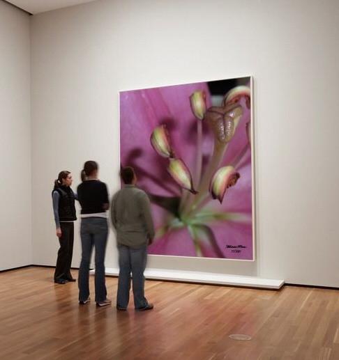 gallery loonapix_14144257091561297337