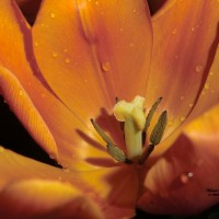 Seasonal Collections - Floral Photography