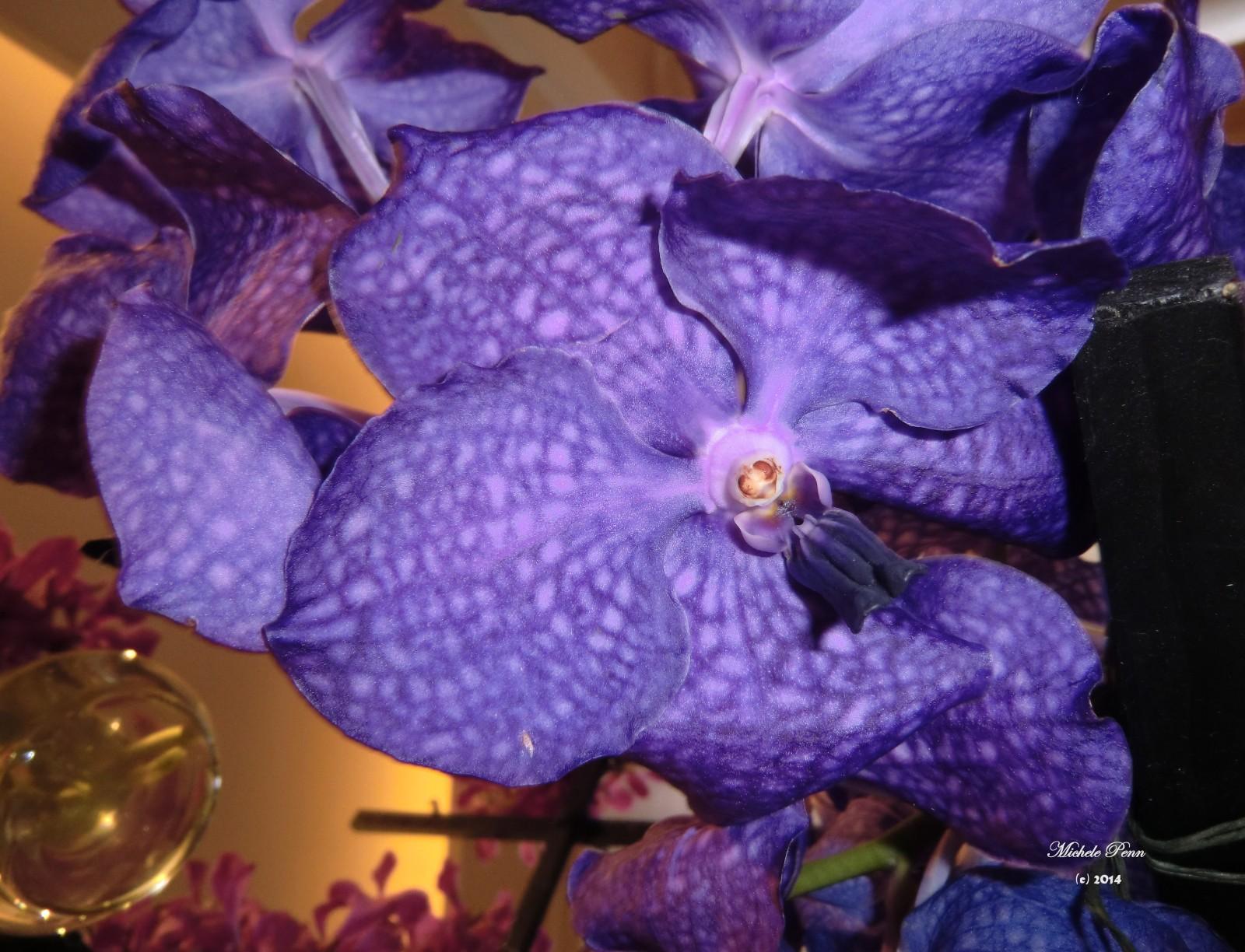 lavender, CIMG6906 (2) orchid (3)